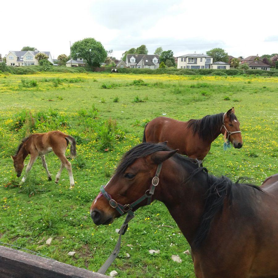 Experiencia inolvidable con los caballos en Dungarvan