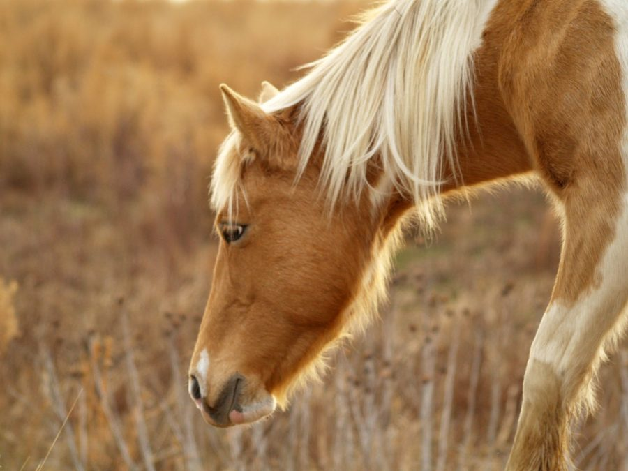 Au Pair de caballos