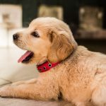 5 tips to keep in mind if the host-family has got a pet